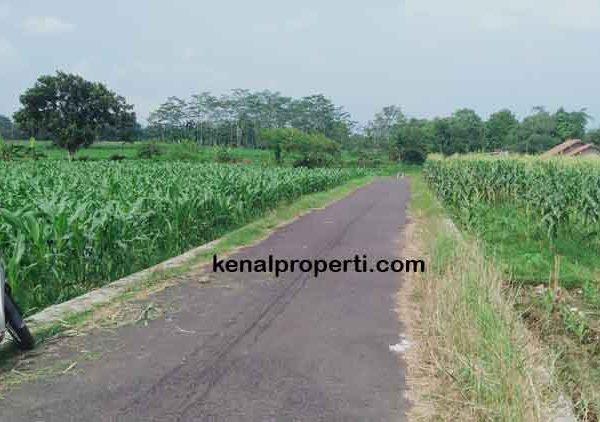 Investasi Sawah Masa Depan, Dijual Sawah di Tambaksogra Purwokerto Banyumas