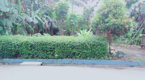 Dijual Tanah Kavling Strategis Luas 504 Meter Siap Bangun di Karangsalam Dekat Universitas Wijayakusuma Purwokerto