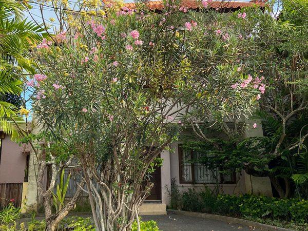 Rumah di Lingk Perumahan Elite Bypass Garden Sanur Bali